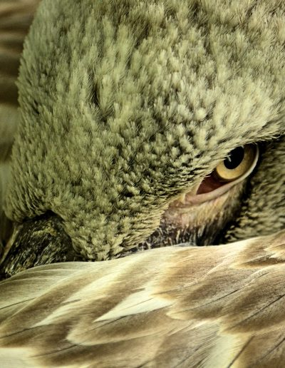 waakzame vogel